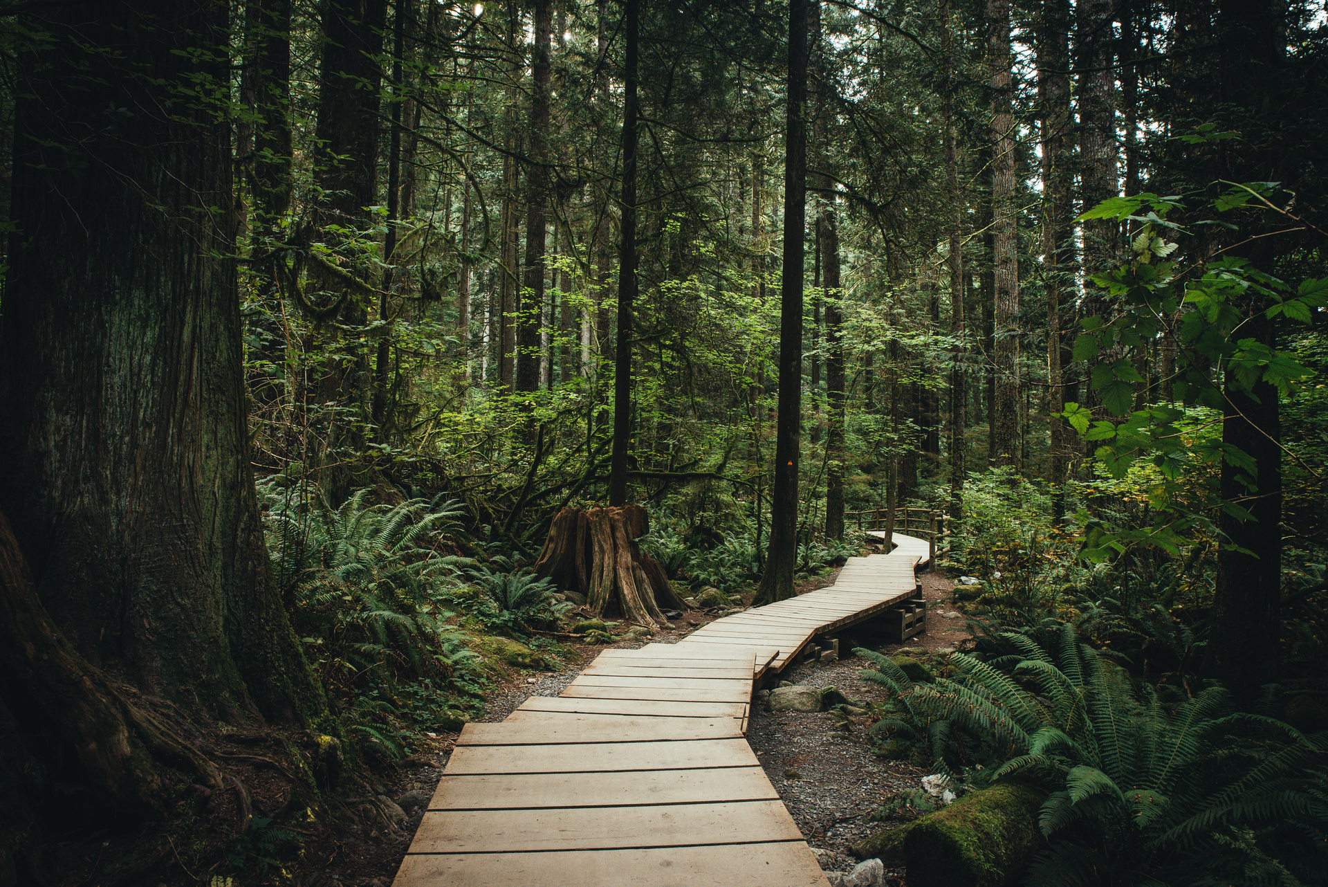vancouver-forest-.jpg